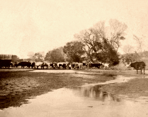 Ellsworth - Cattle at Smoky Hill River, Alexander Gardner, 1867